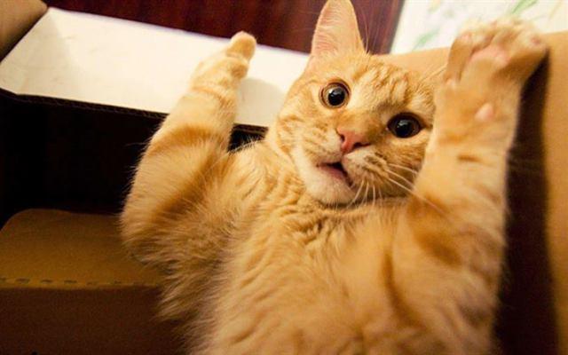 8 причин, почему нужно любить кота