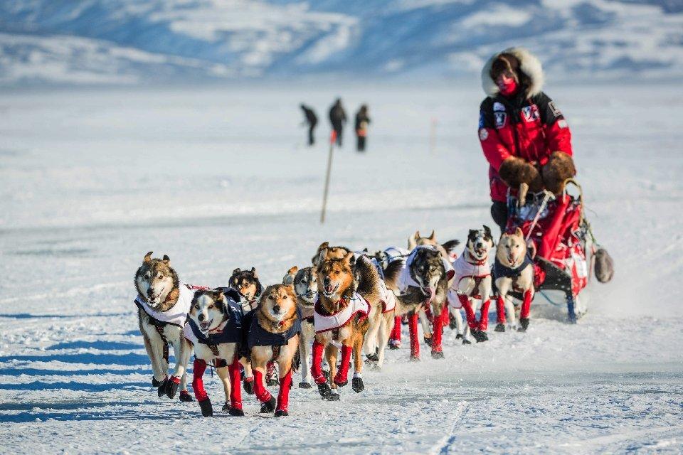 Самая престижная в мире гонка на собачьих упряжках