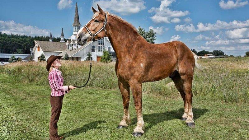 Большой Джейк - самый высокий конь в мире