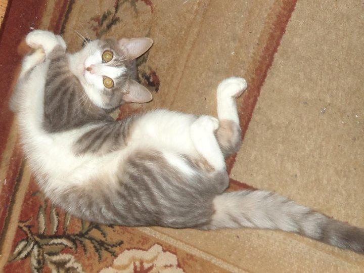 История про нашего любимца, кота с некошачьим именем Мухтар