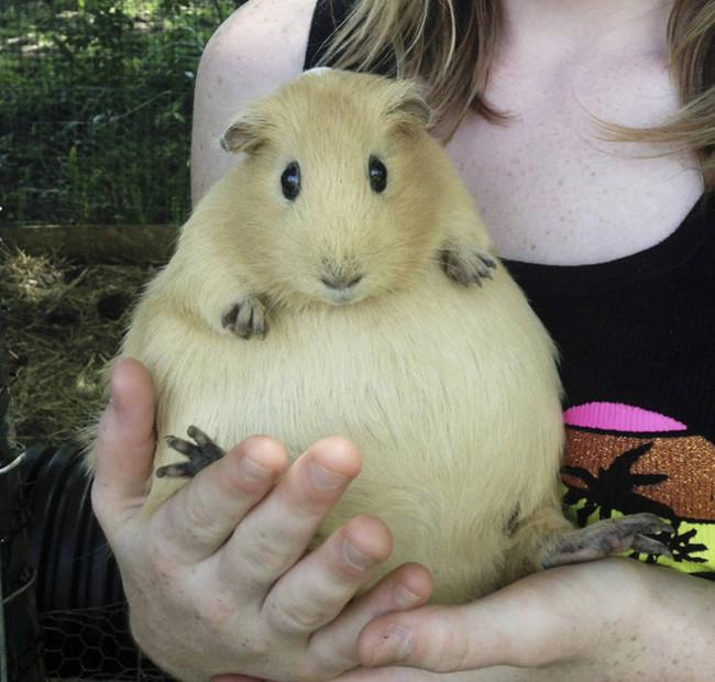 Животные, которые беременны (19 фото)