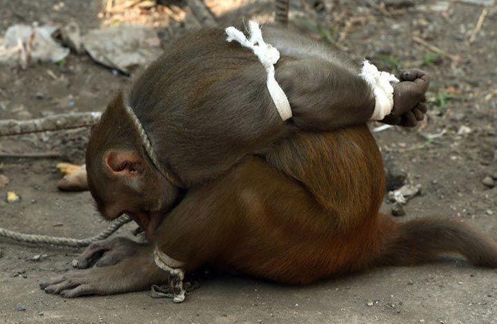 Бесплатно без регистрации онлайн секс с обезьяной