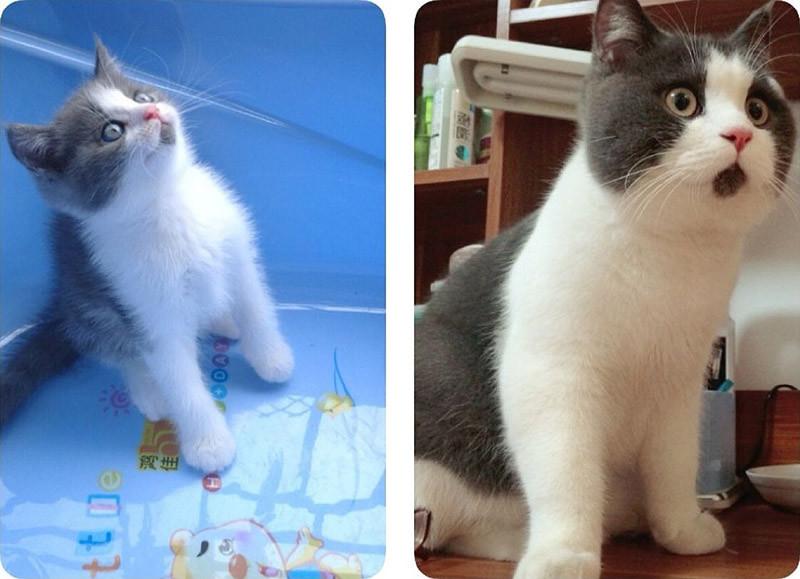Удивлённый кот Банья