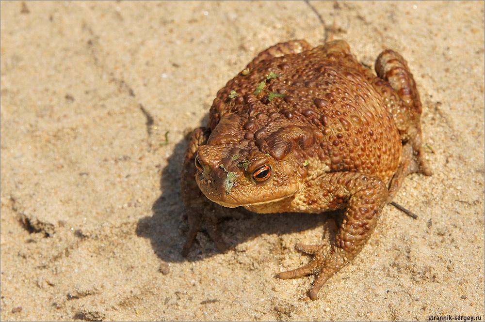 Весенний позитив: прикольные лягушки