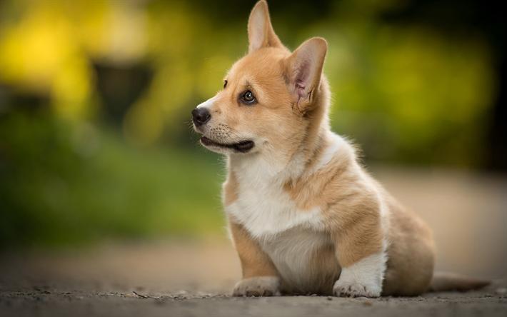 Жить с собакой
