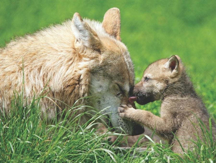 трогательные фото животных с детенышами гигантские размеры абсолютное