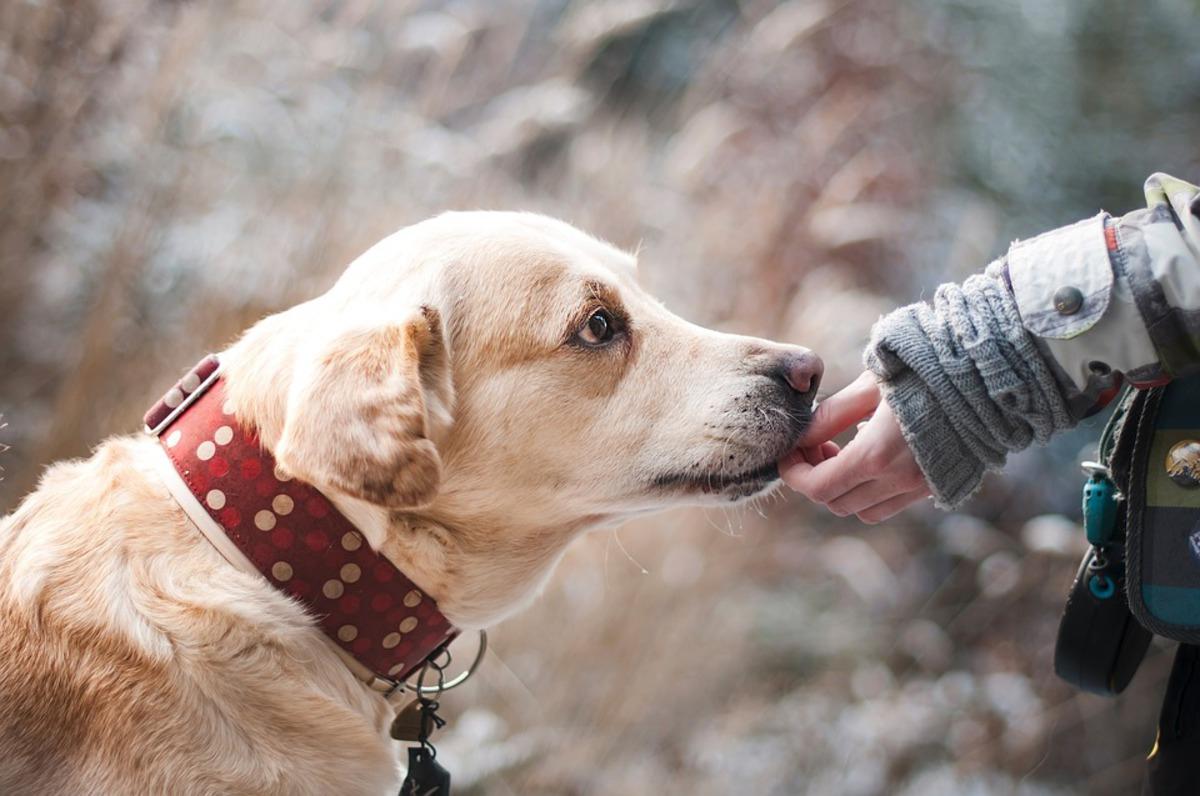 Женщина разбогатела благодаря прогулкам с собакой