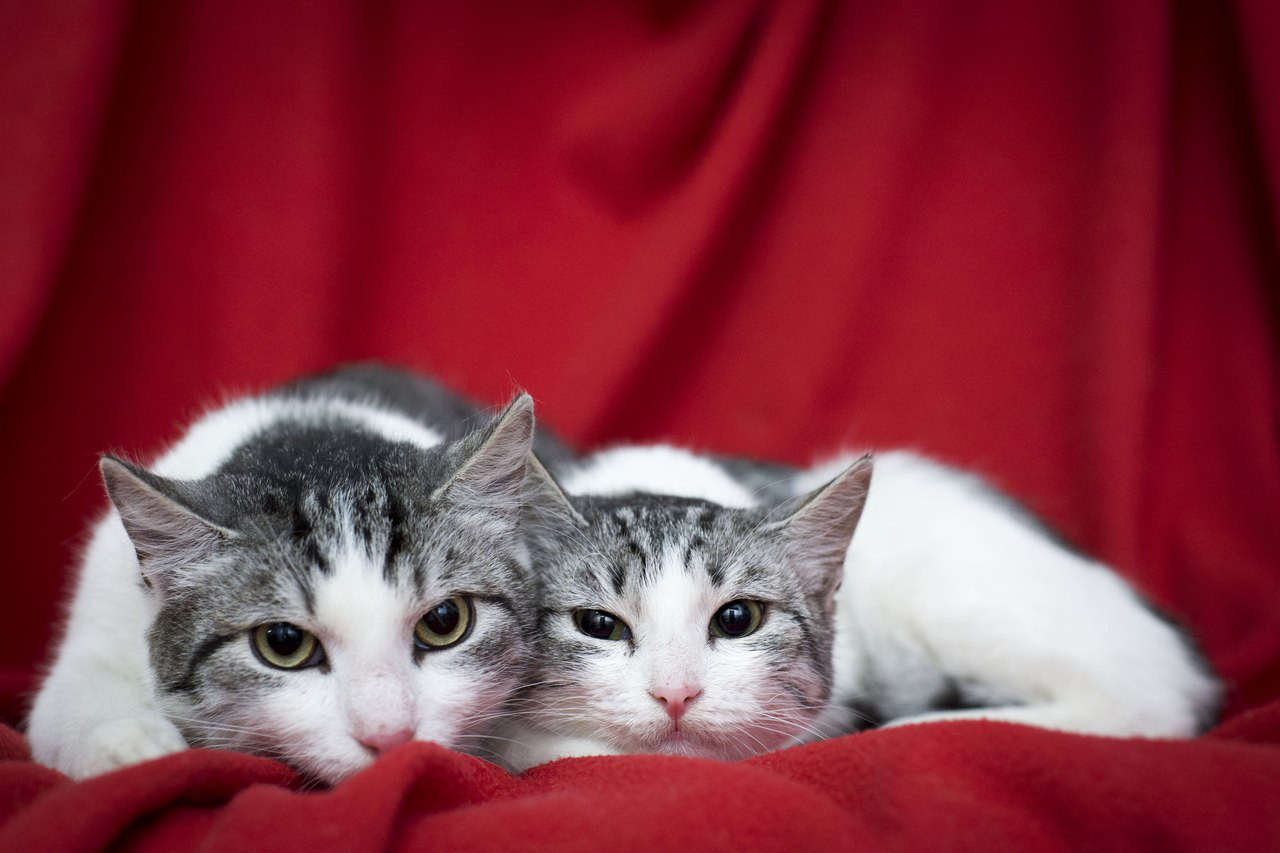 Пятничные котики Кай и Герда…