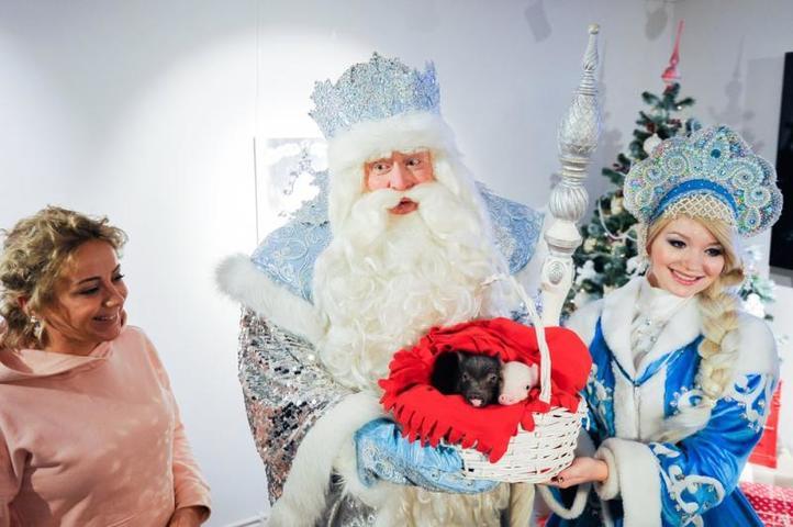 Радость и Счастье подарил Московскому зоопарку Дед Мороз