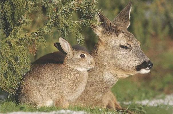 Эти забавные животные: близнецы от разных родителей