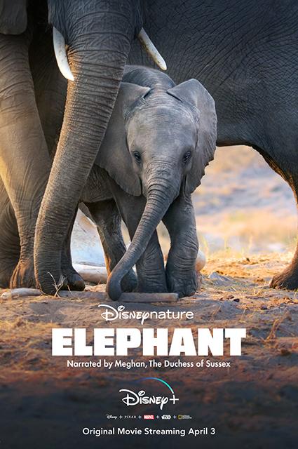 Меган Маркл озвучила документальный фильм Disney про слонов. Его премьера уже в апреле Меган, Маркл, фильма, состоится, принц, документального, премьере, Disney, которого, также, Гарри, апреля, сотрудничеству, готовность, после, летом, прошлым, сообщалось, Ранее, просьбой