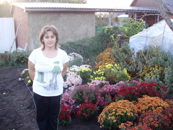 История о том, как я приручала хризантему мультифлора