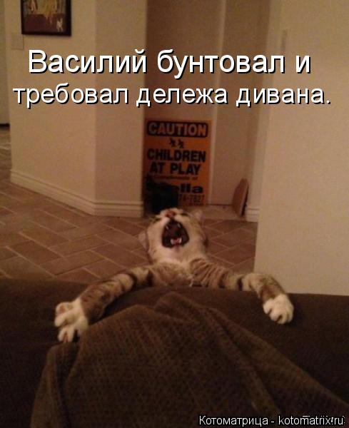 Котоматрица: требовал дележа дивана. Василий бунтовал и