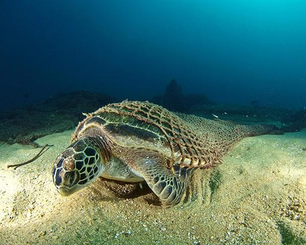 Лучшие фотографии подводного…