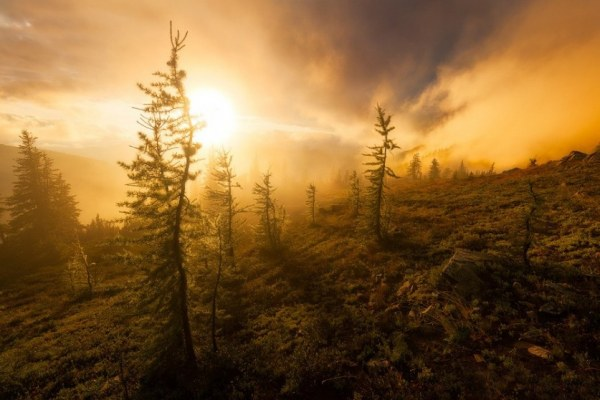 Волшебный край! Природа Сиэтла на снимках Дэнни Зейдмана