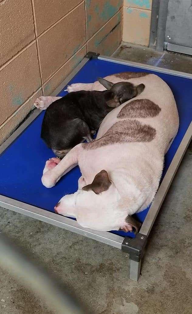 Не разлучайте их! Знакомство собак в приюте обернулось нежной дружбой…