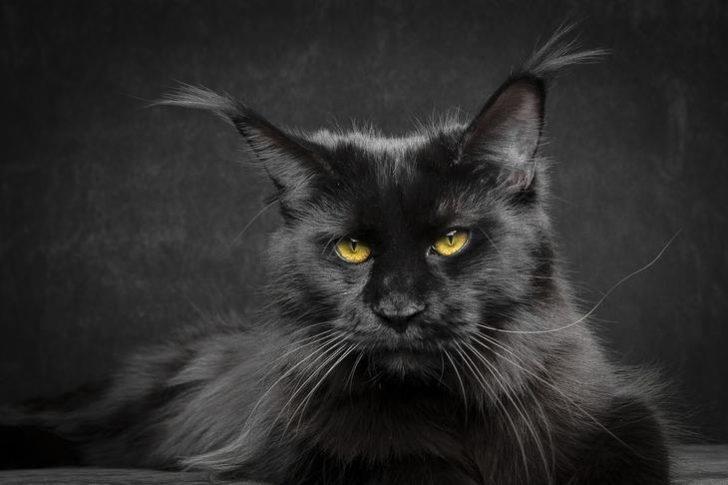 Как подвальный кот спас своих собратьев от верной смерти