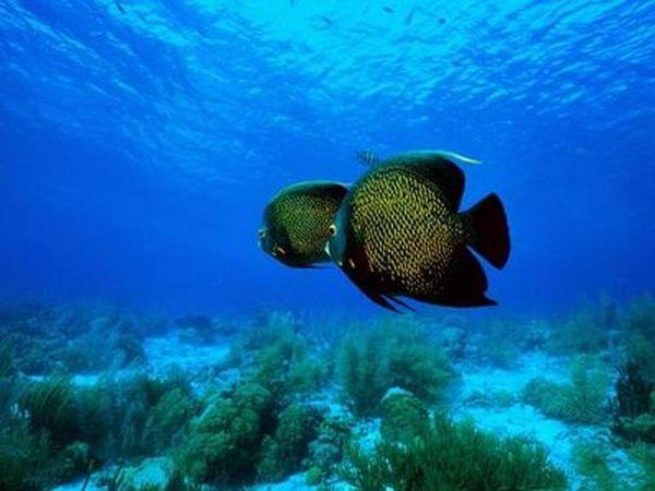 Подводный мир (20 фото)