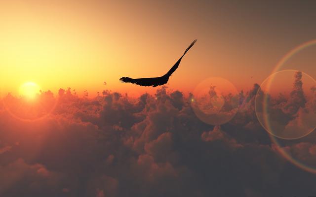 Птица в моменты полёта...