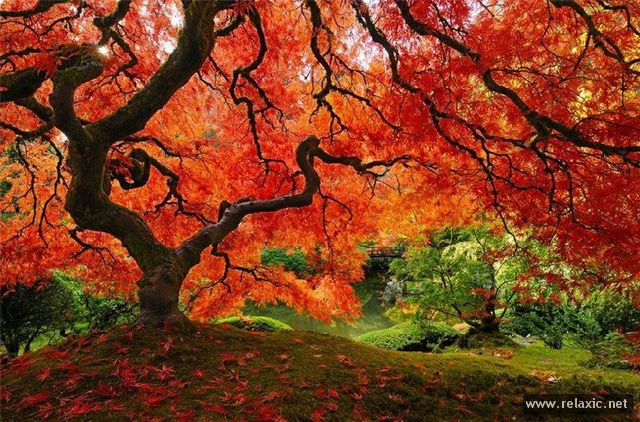 Осень в японском парке