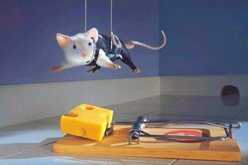 Как избавиться от мышей: подборка советов