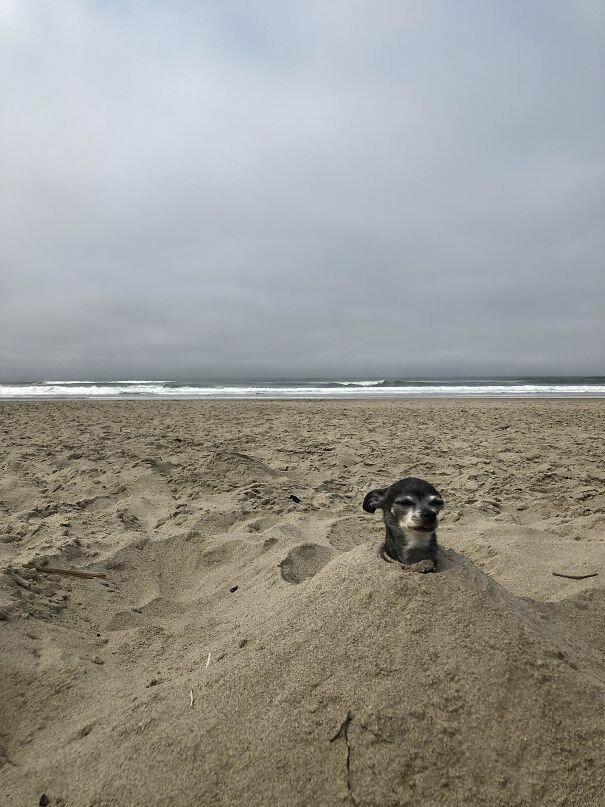 Почти Сфинкс Вот это ДА, забавно, находки, неожиданности, пляжи, смешно, странные вещи, удивительное рядом