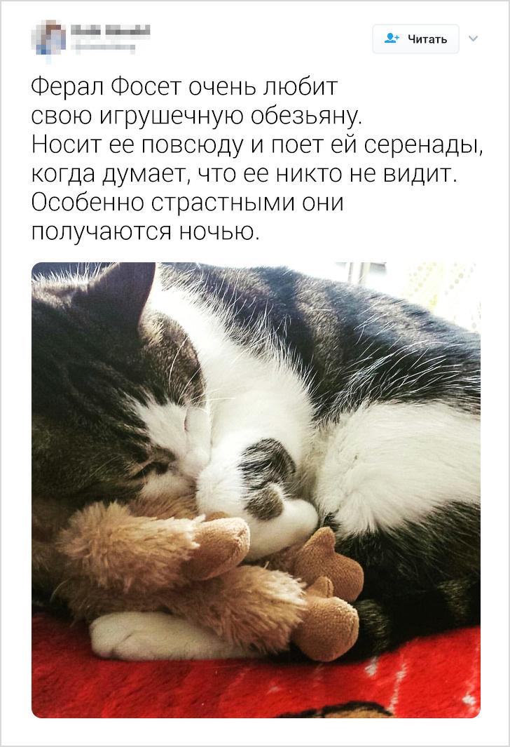Пользователи твиттера рассказывают о странностях своих котов