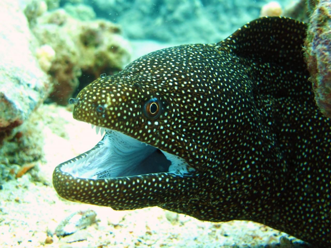 фото морских обитателей с описанием приворот