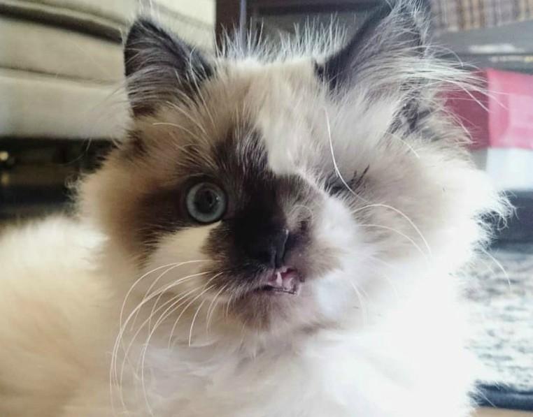 Одноглазый кот с кривым ртом вырос в настоящего красавца до и после, история, история спасения, кот, коты, кошки