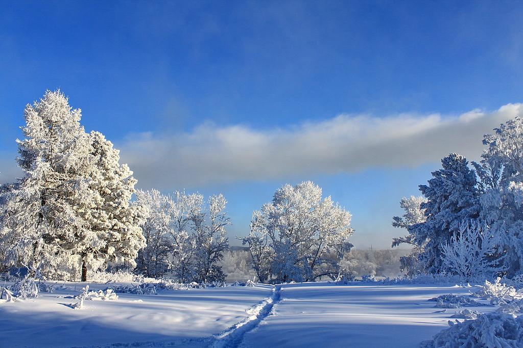 Так зимней сказки льется благодарность...