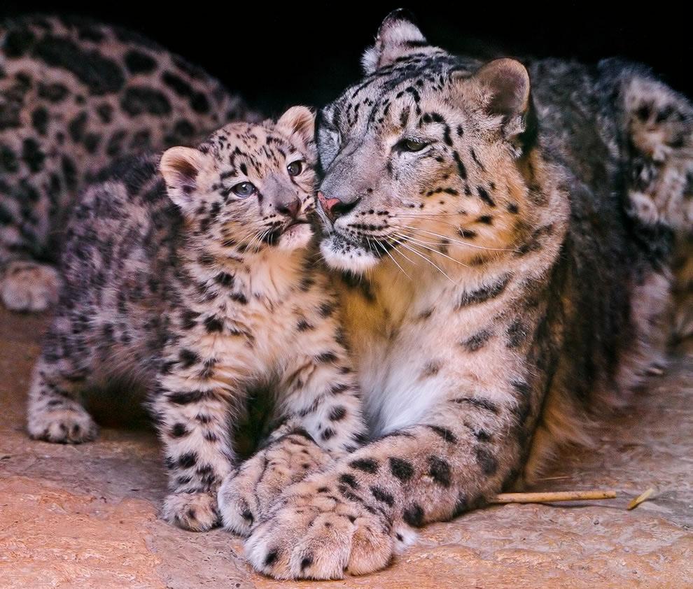 картинки с мамами и детенышами животных честь