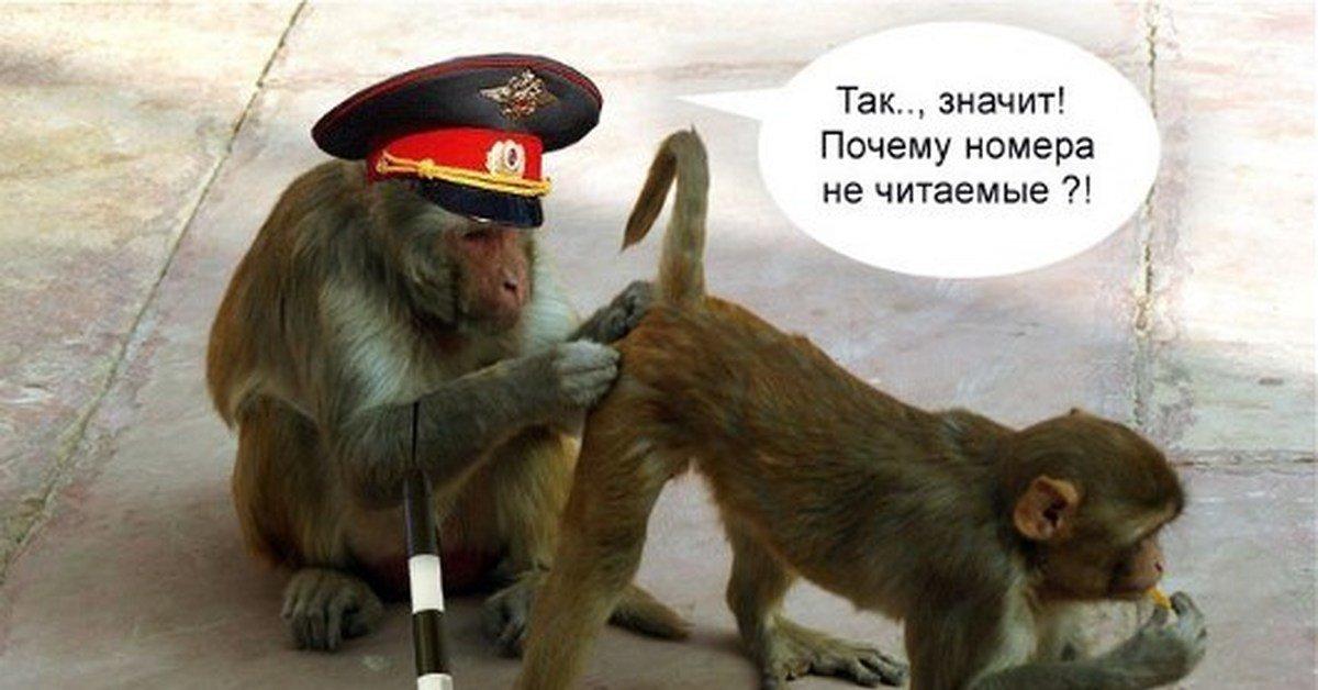 Использованием, прикольные открытки с обезьянами и со словами