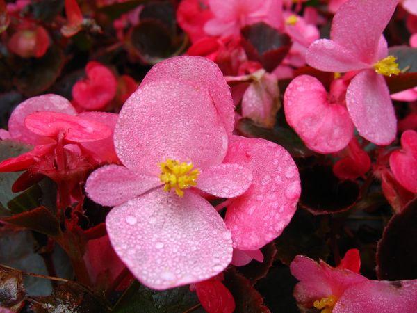 Растения цветущие в июле список. Какие цветы сажают в июле в открытый грунт