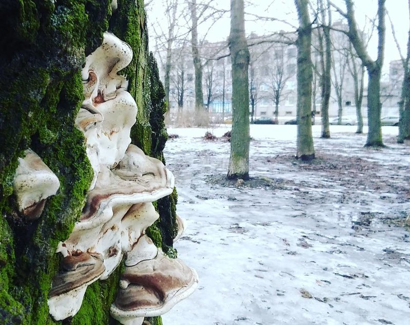 Грибы на улицах наших городов (настоящие) виды, город, грибы, красиво, природа, эстетика