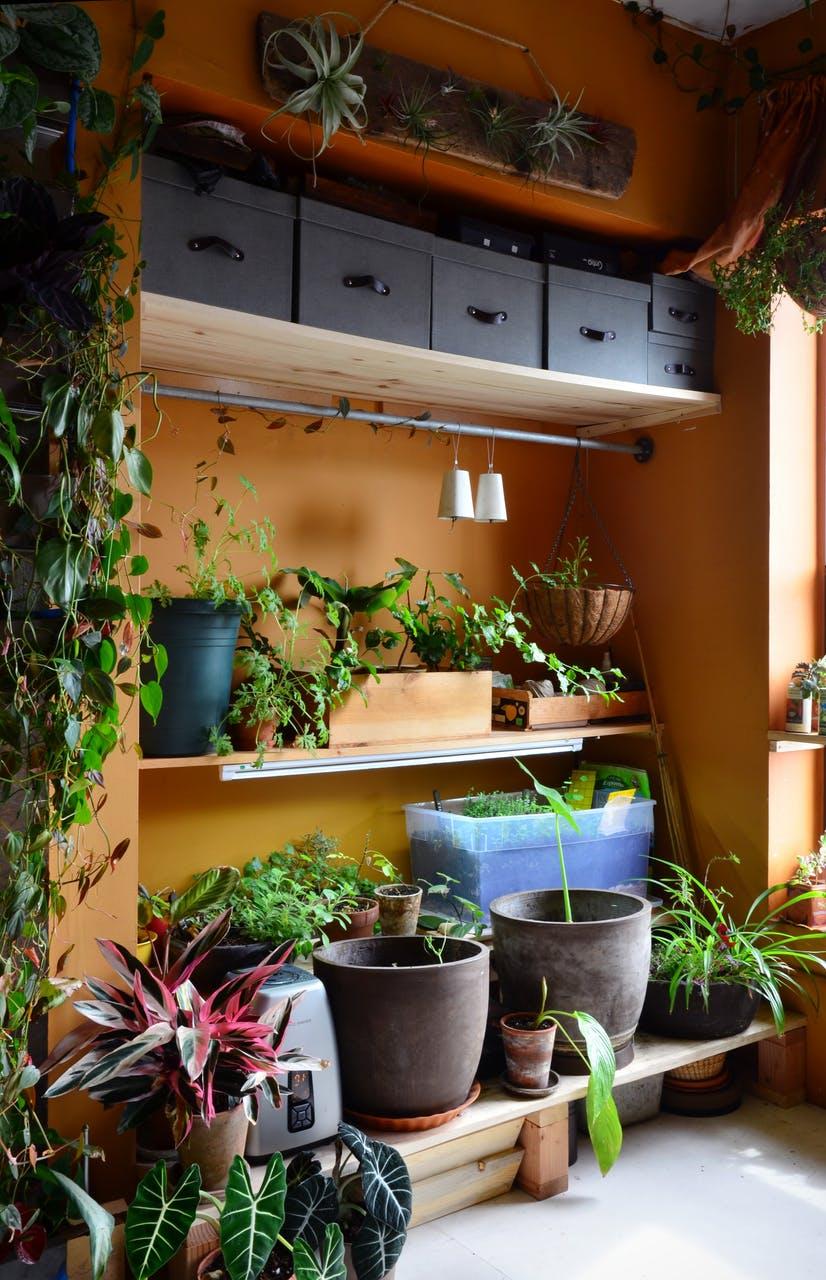 Множество горшков с растениями - фото 02