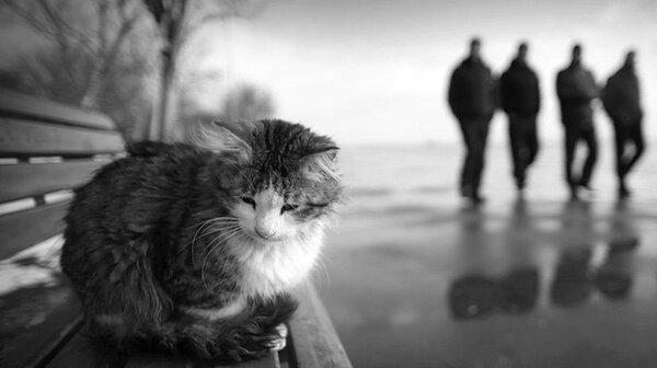 Кошка на скамейке медленно угасала