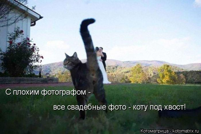 Котоматрица: С плохим фотографом - все свадебные фото - коту под хвост!