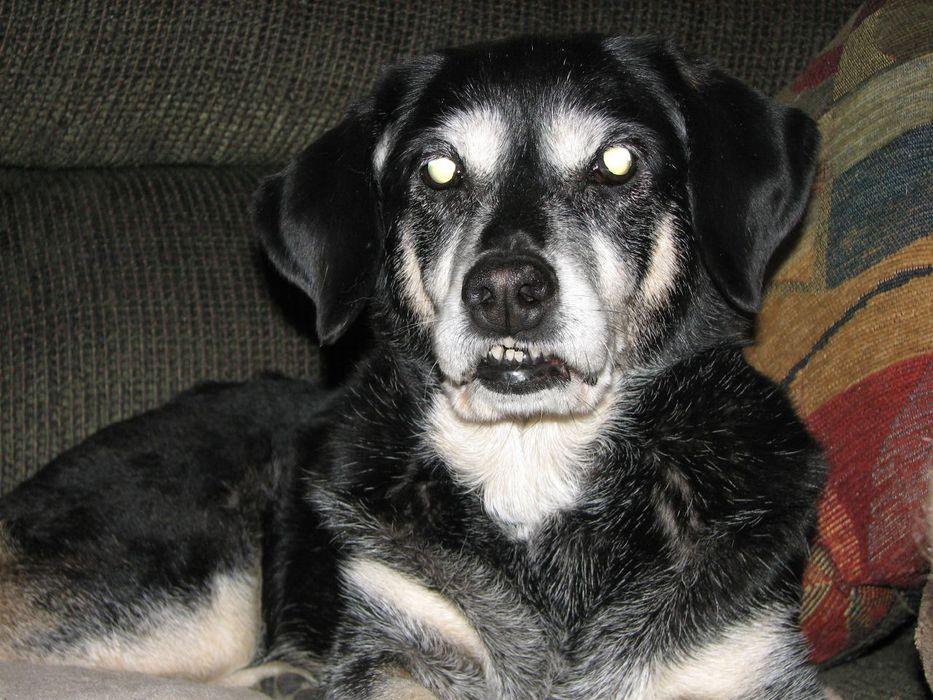В Подмосковье собака загрызл…