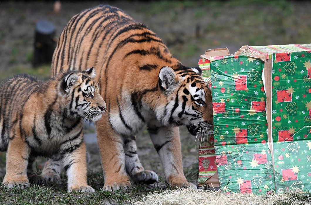Новый год в зоопарке