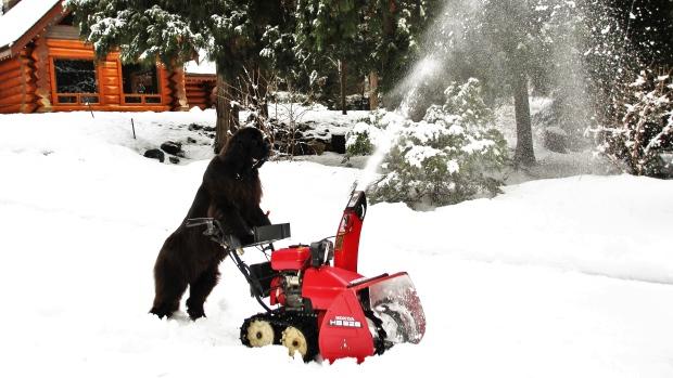 Эта канадская собака почти к…