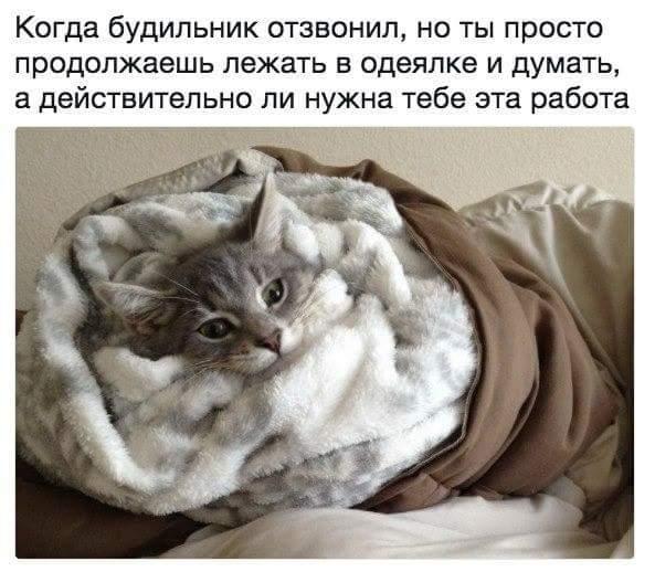Пятничные котики вновь посетили нас