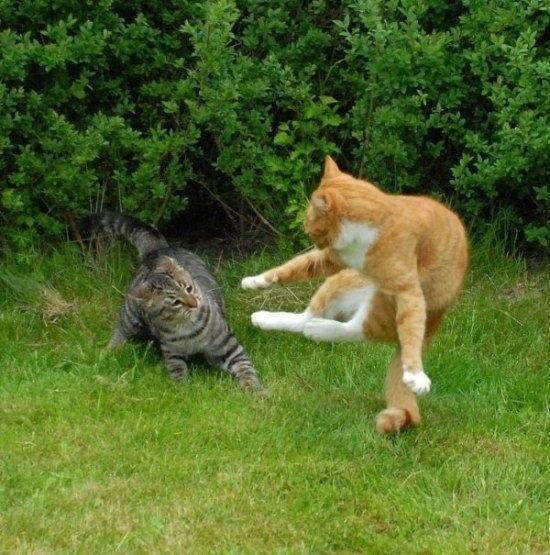 Битва котов - замедленная фотосъёмка