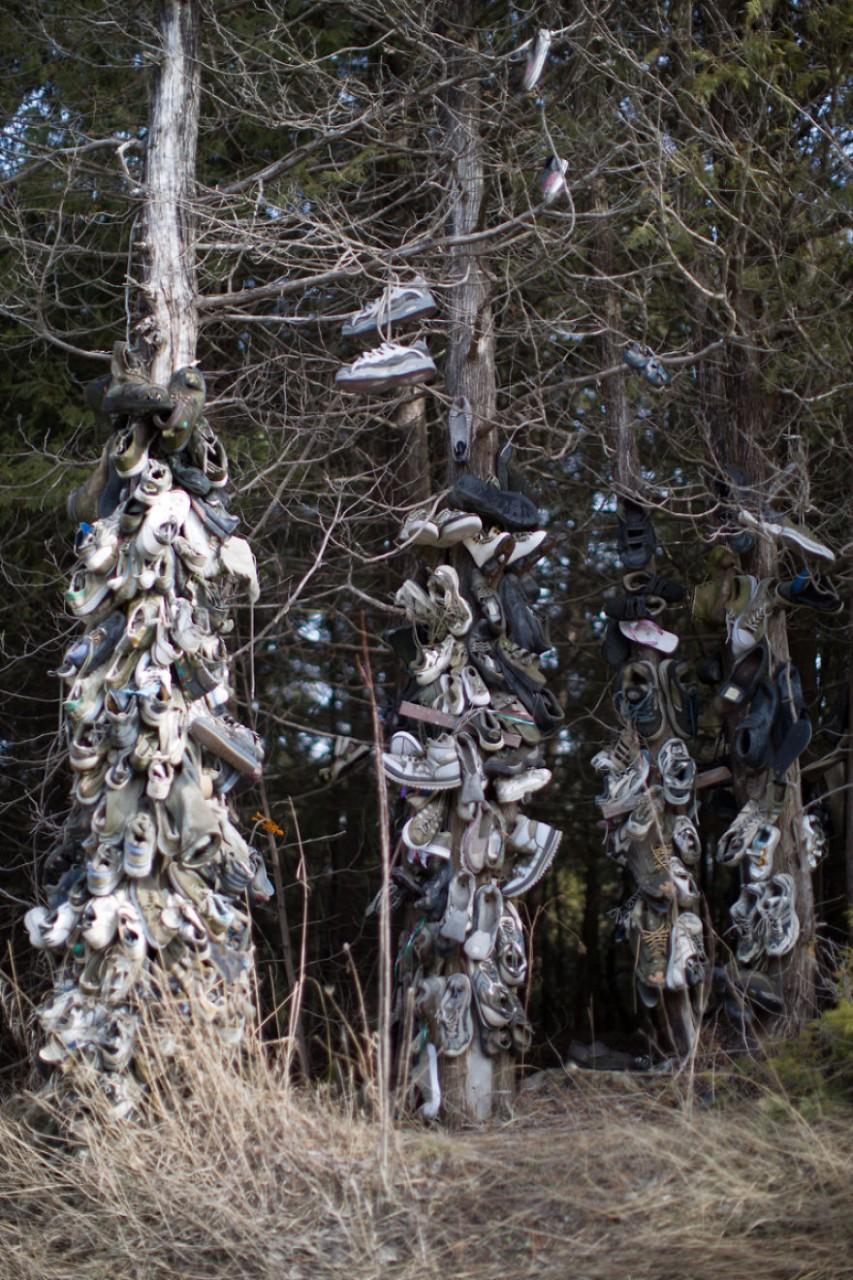 Загадочный «обувной лес» в объективе