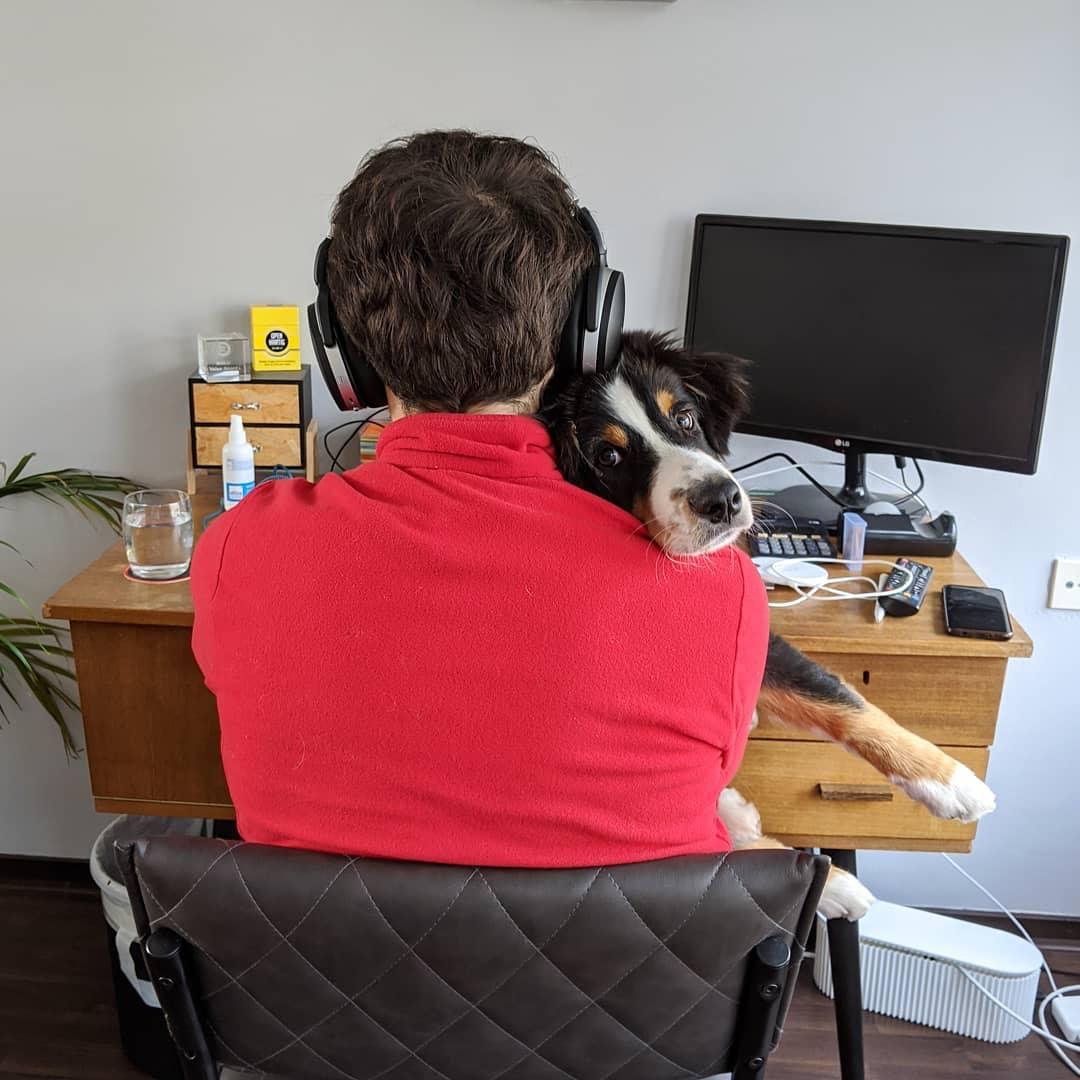Пользователи сети показали, каким стало их рабочее место, когда они стали работать дома из-за карантина домашний очаг,животные,работа,юмор и курьезы