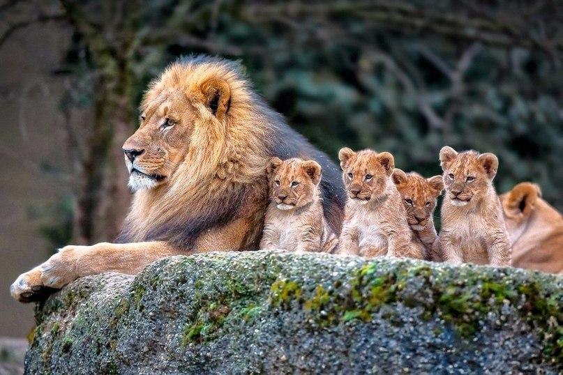 глава семьи