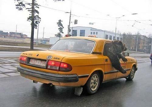 Истории таксиста, произошедшие за одну неделю