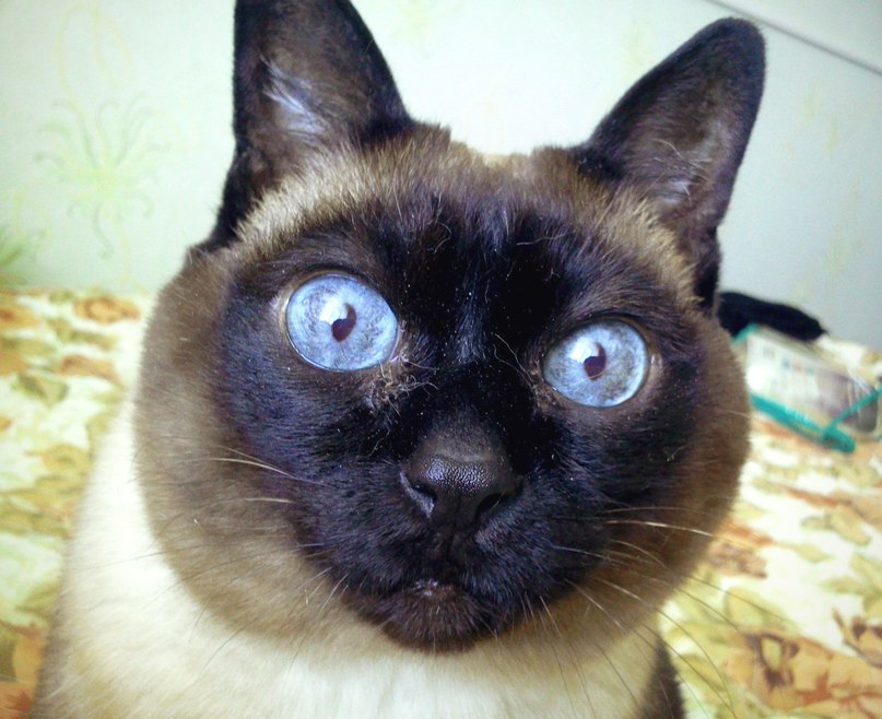 Коты-герои, коты, спасшие жи…