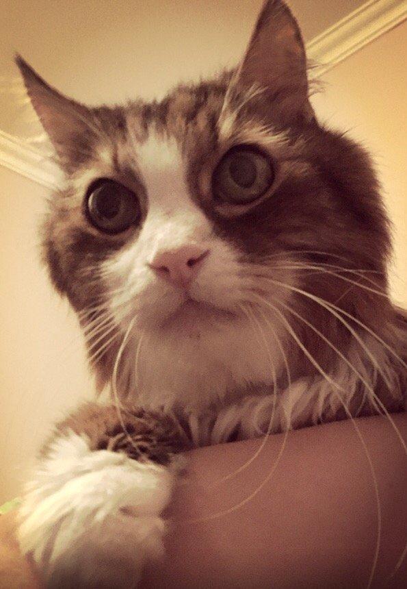 7 дней кота в одиночестве дружба, животные, корм, кошки, помощь, приют