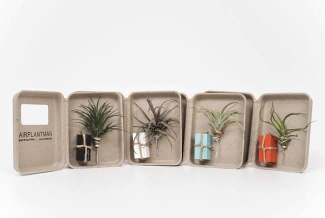 Живая стена из растений: набор