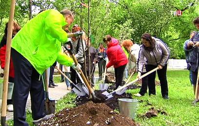 На Комсомольском проспекте высадили березы и рябины